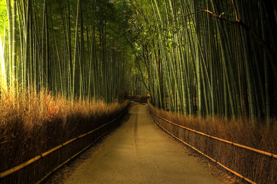 Sagano-Bamboo-Forest-Japan1