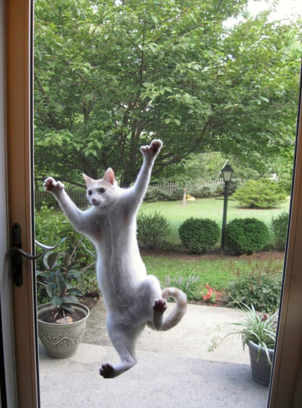 funny-animal-outside-door-let-me-in-141__605