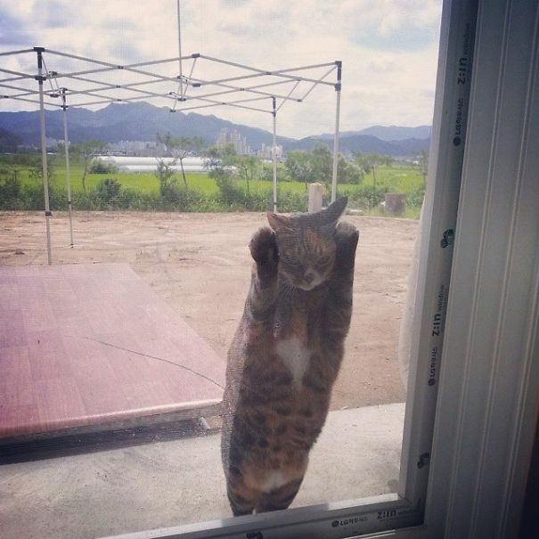funny-animal-outside-door-let-me-in-22__605