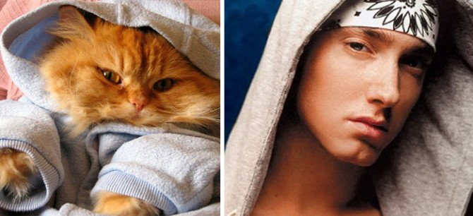 10-incredible-cats-that-look-like-famous-people-1-670x306
