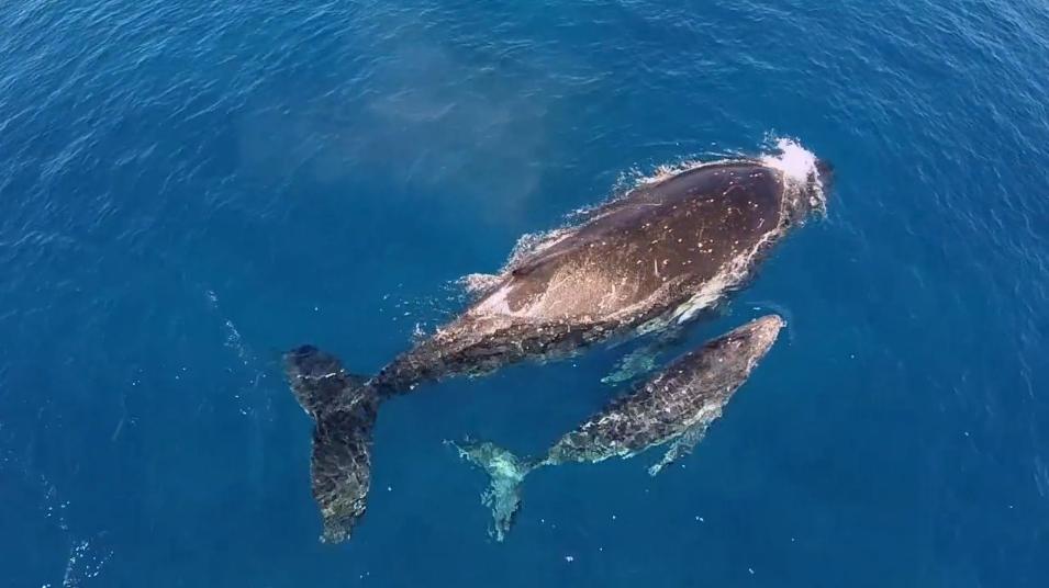 киты в море