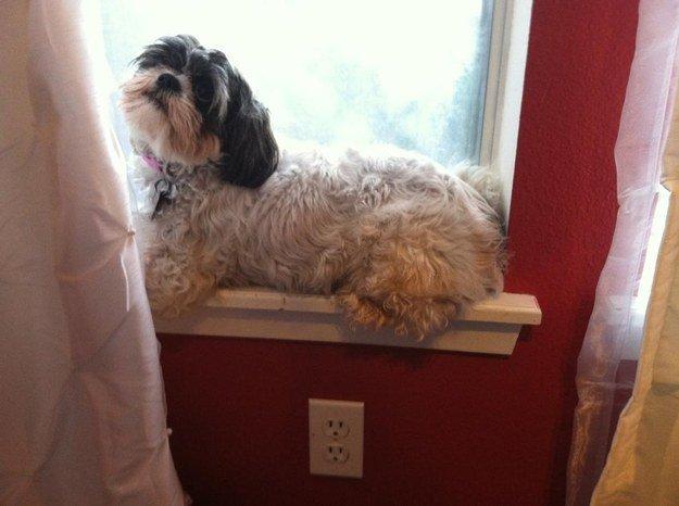 собака на подоконнике