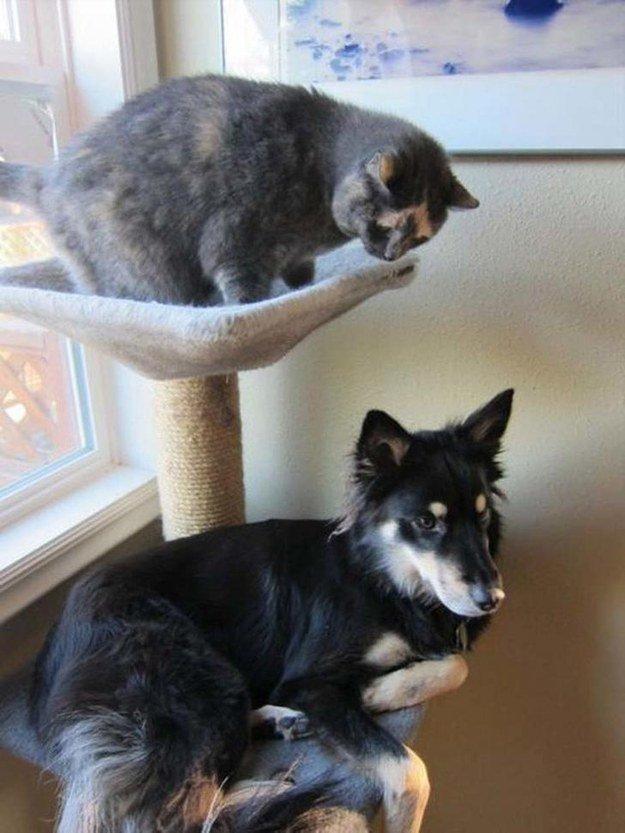 собака сидит вместе с кошкой