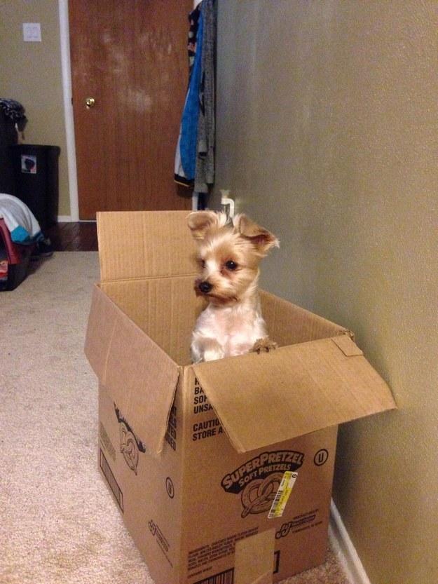 собака сидит в коробке