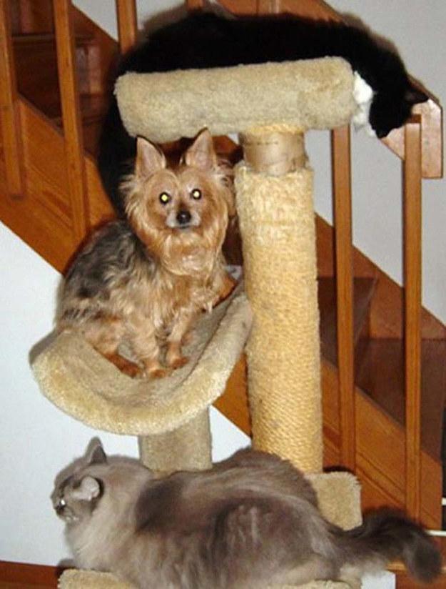 собака на кошкином месте