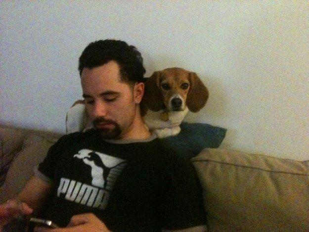 собака сидит на месте кошки