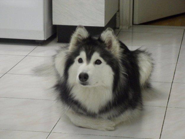 собака сидит как кот
