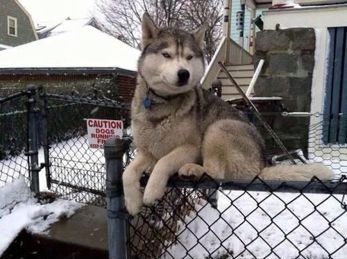 собака сидит на заборе