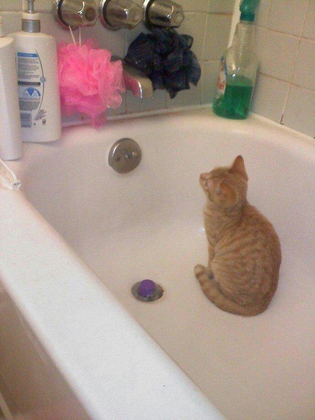 кошка в ванной