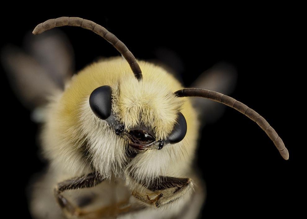жуткие насекомые