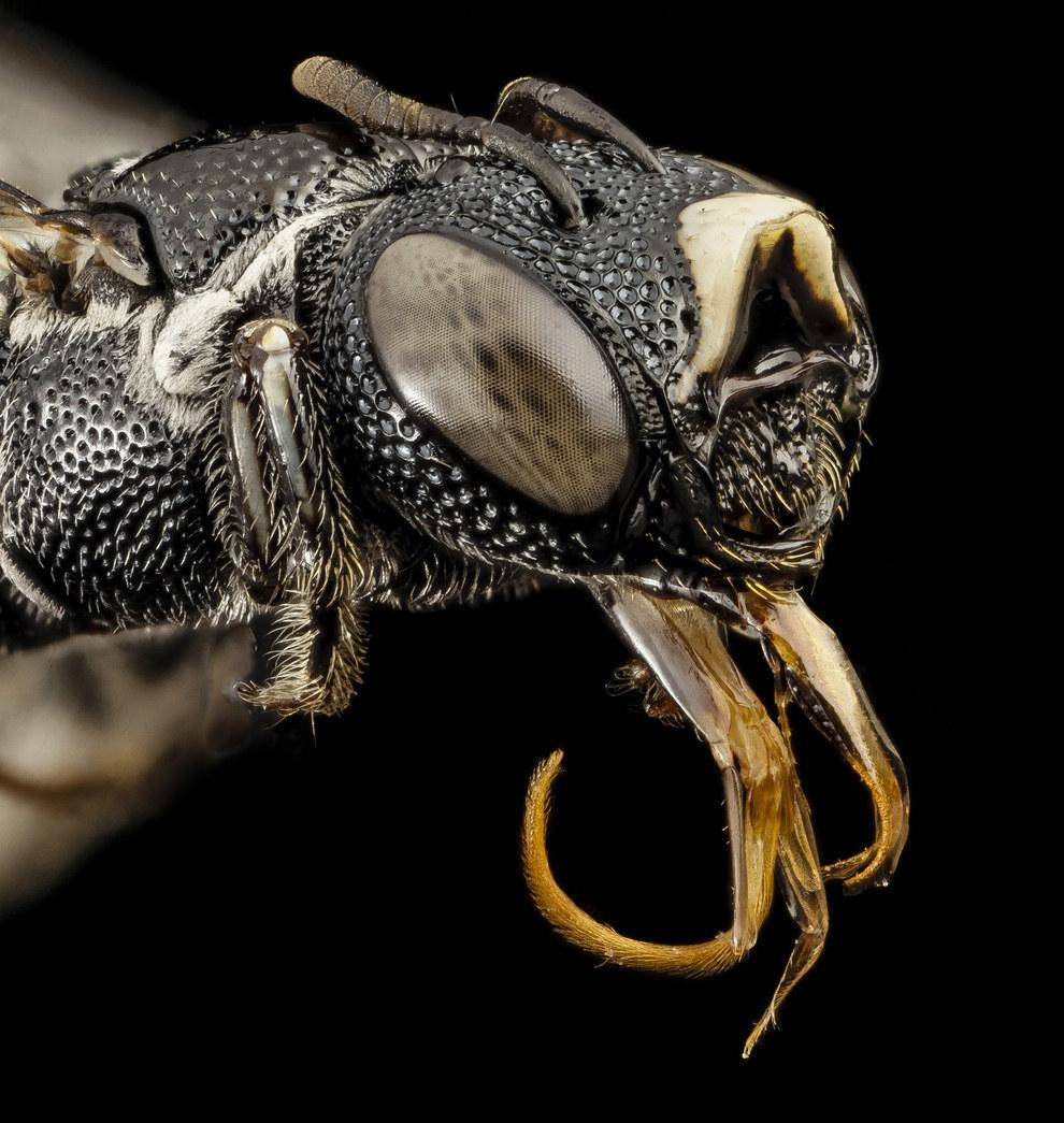 страшные насекомые