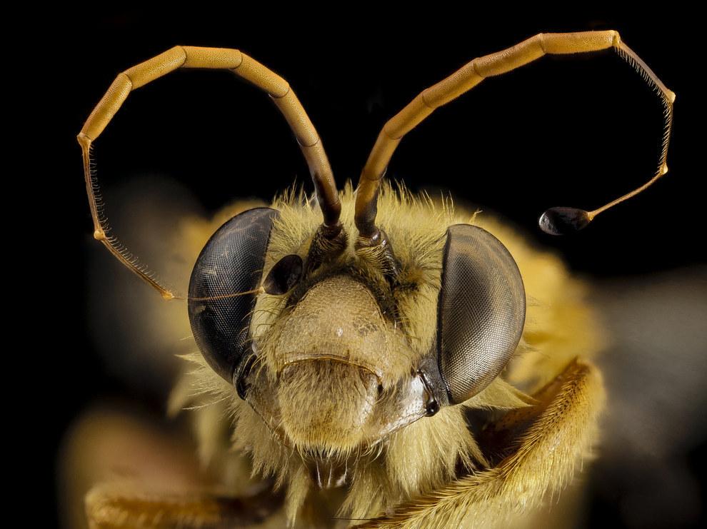 жуткие лица насекомых