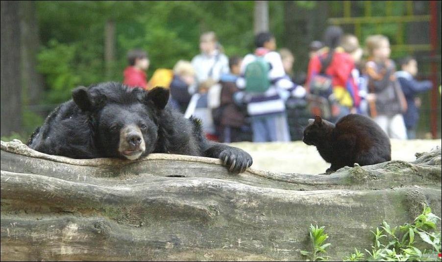 грустный и задумчивый медведь