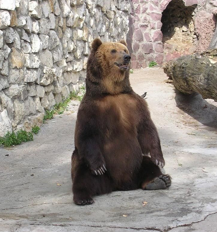 сидит медведь на заднице