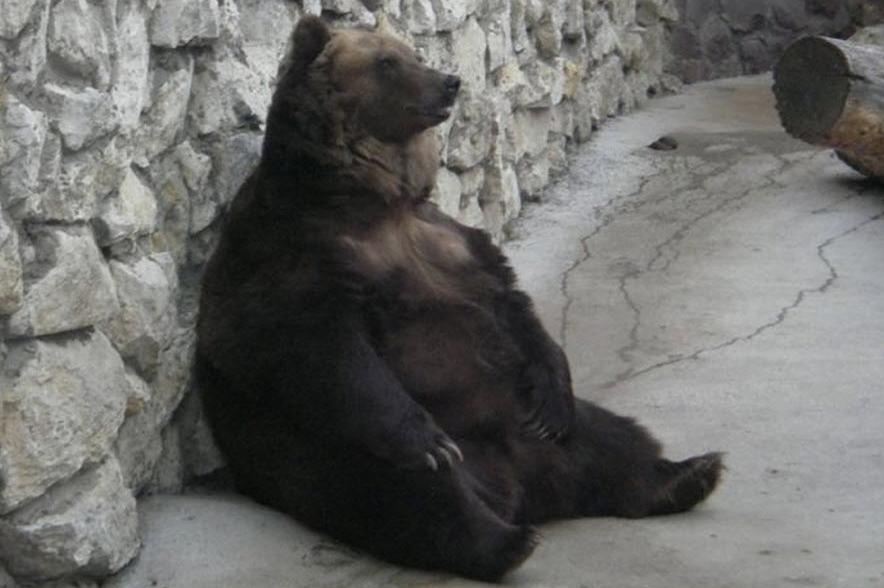задумчивый медведь сидит