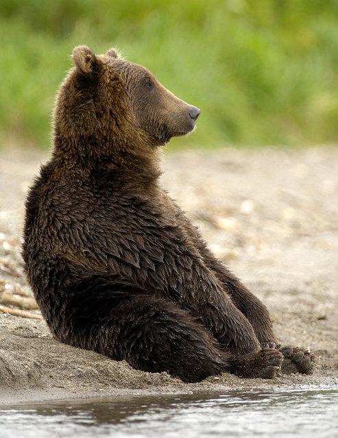 медведь сидит