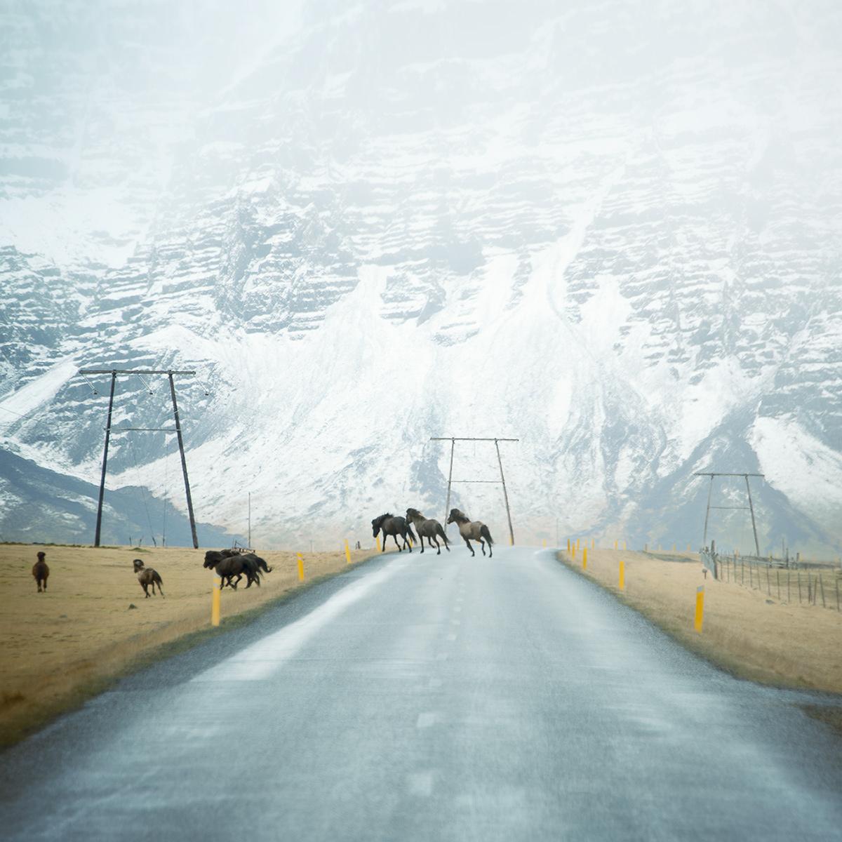 лошади на дороге