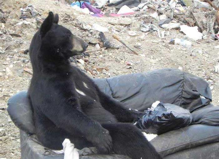медведь сидит на диване