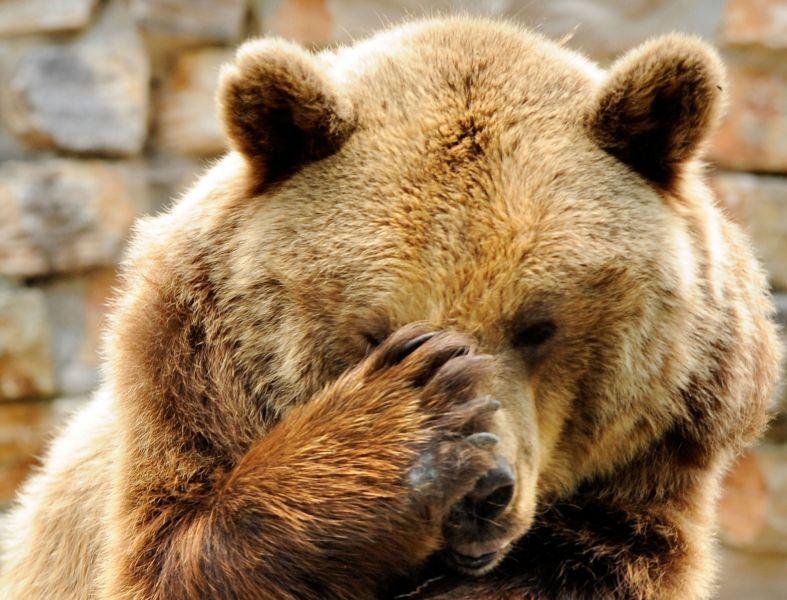 фейспал медведь