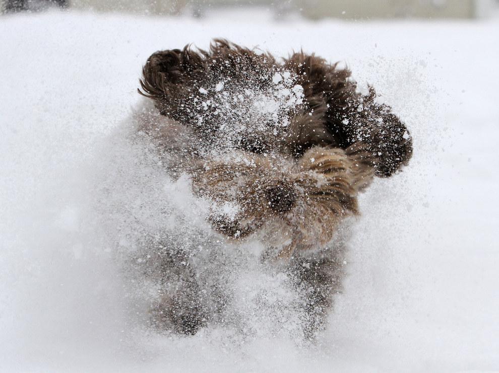 собака в снегу
