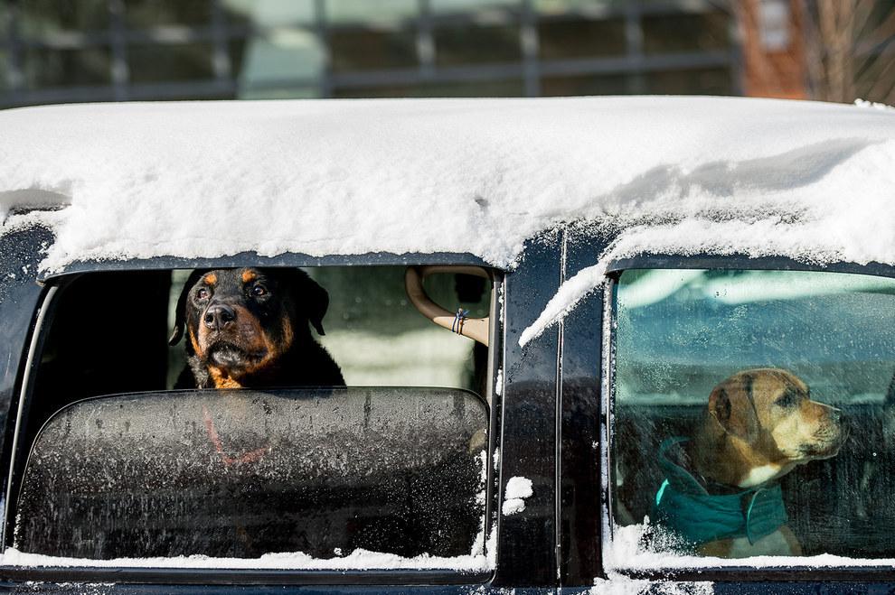 Зима и собаки