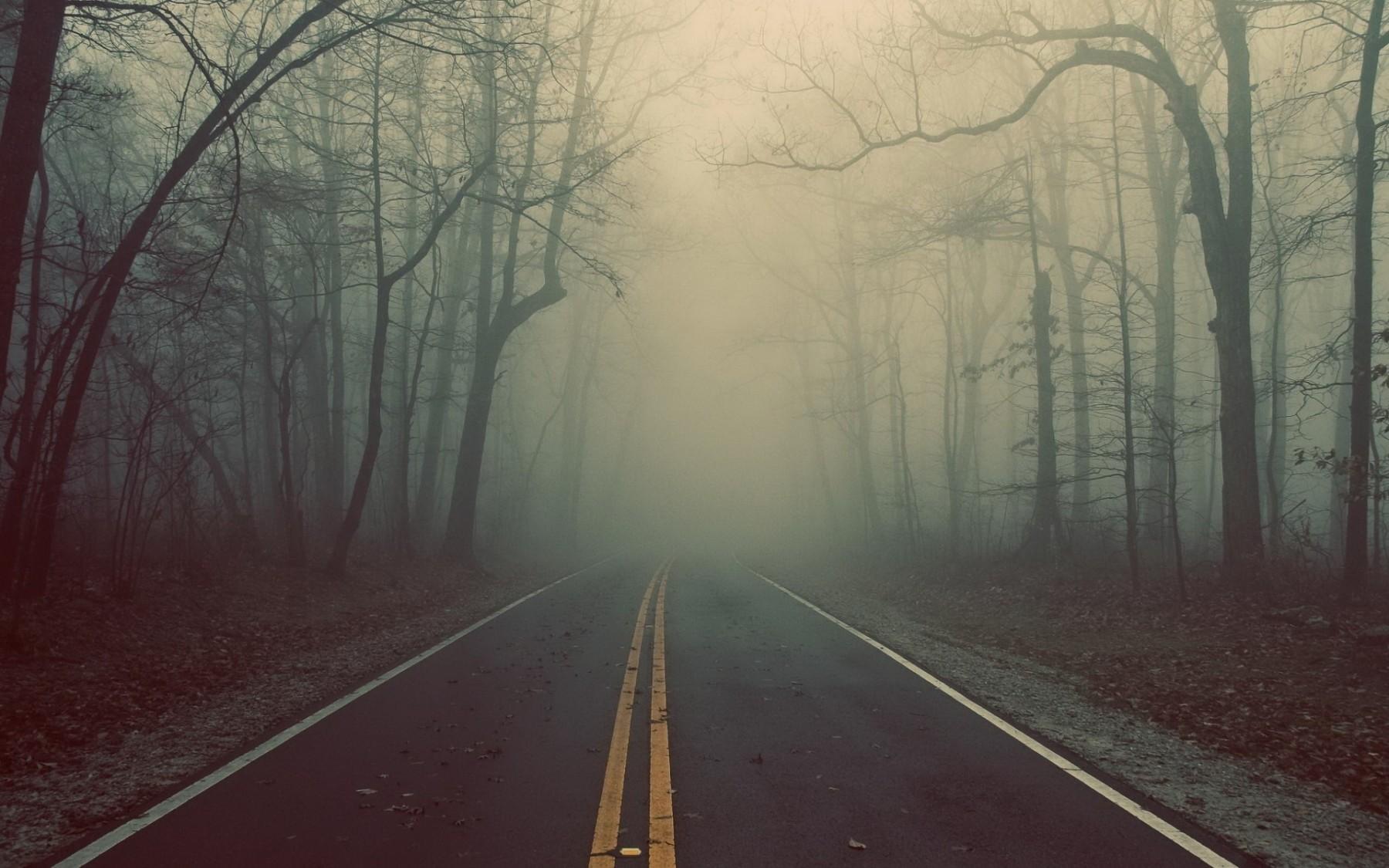 лес дорога туман