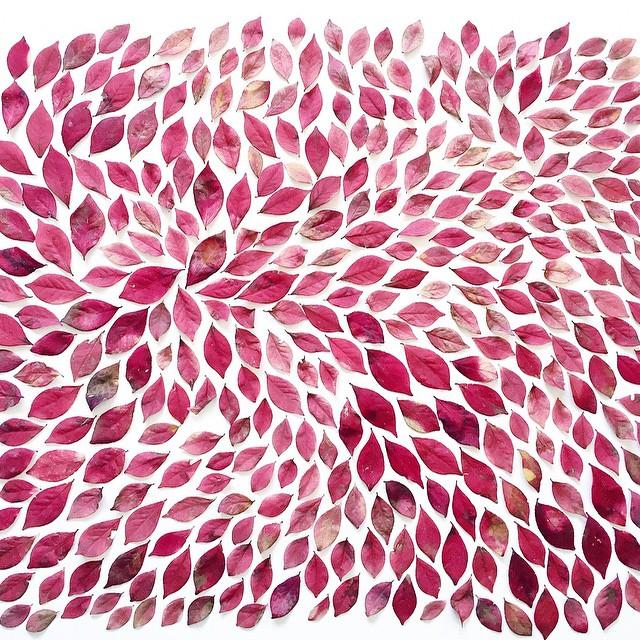 бардовые листя