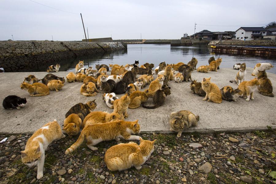 Остров где живут кошки