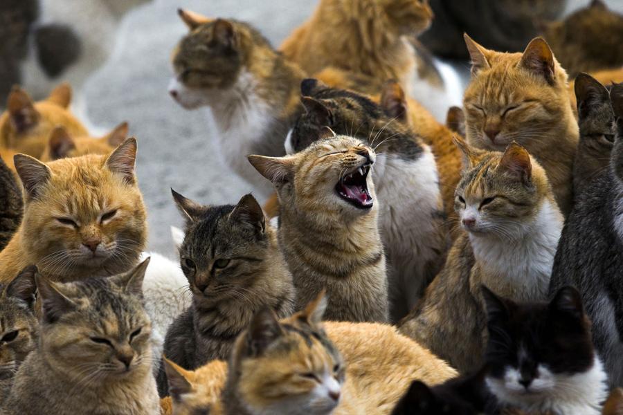Кошки в Японии