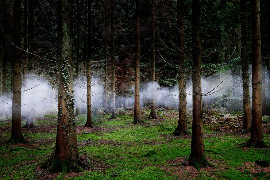 Странный лес