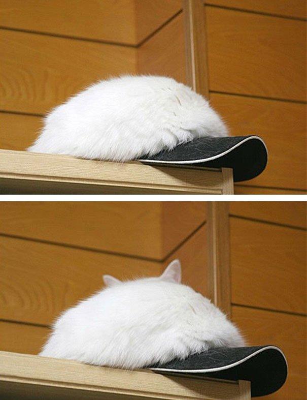 Кот как кепка