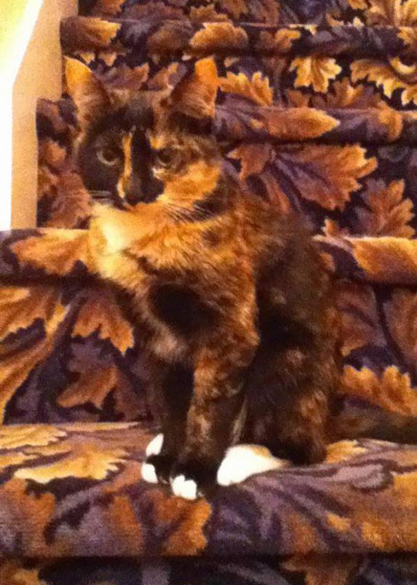Пятнистый рыжий кот на ковре