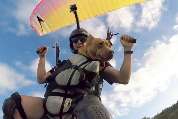Пес любит летать