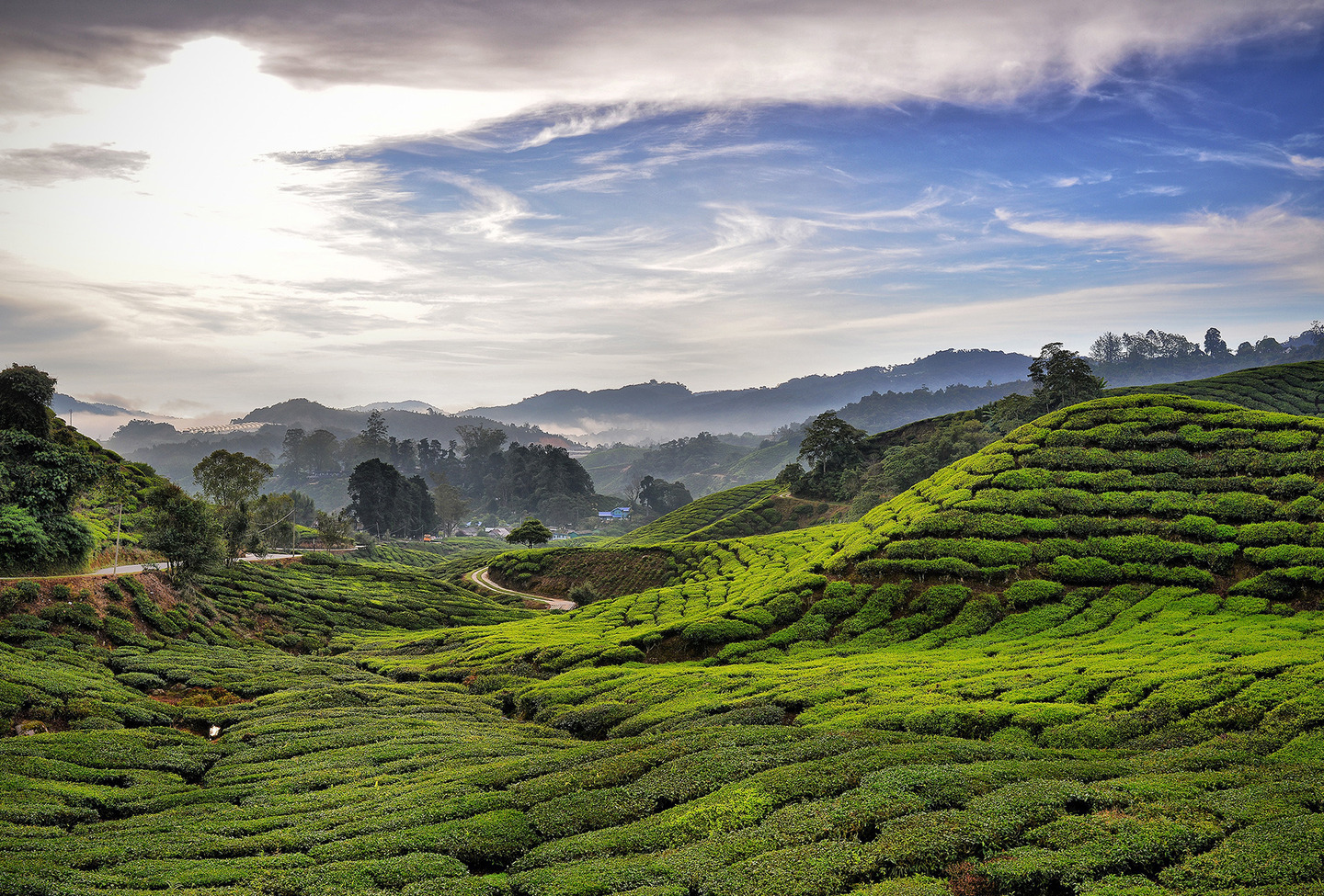 Malaysia Cameron Highlands by Mohamed Aris