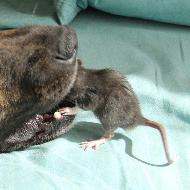 animal-friends-rat-dog-osiris-riff-201