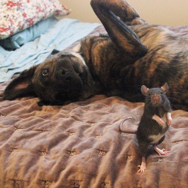 animal-friends-rat-dog-osiris-riff-261