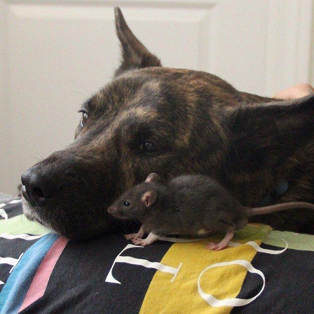 animal-friends-rat-dog-osiris-riff-81