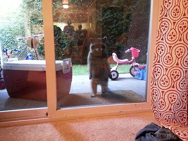 animals-asking-to-go-inside-28__605