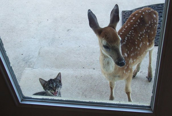 animals-asking-to-go-inside-38__605