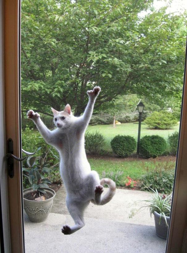 funny-animal-outside-door-let-me-in-141__605
