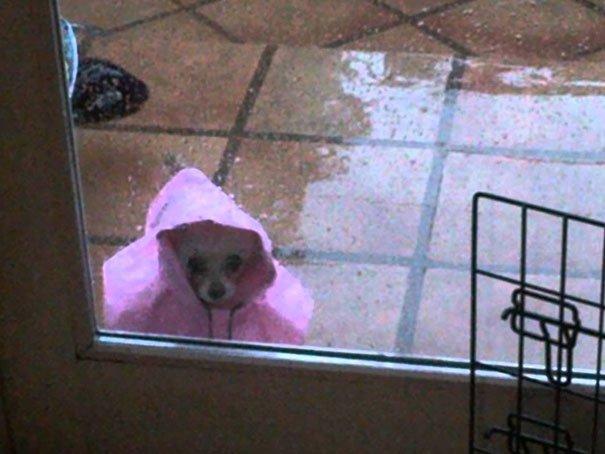 funny-animal-outside-door-let-me-in-1__605