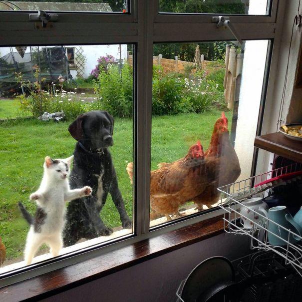 funny-animal-outside-door-let-me-in-20__605