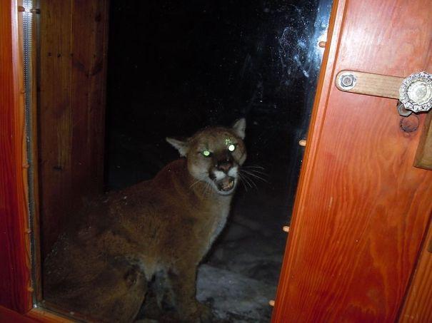 funny-animal-outside-door-let-me-in-3__605
