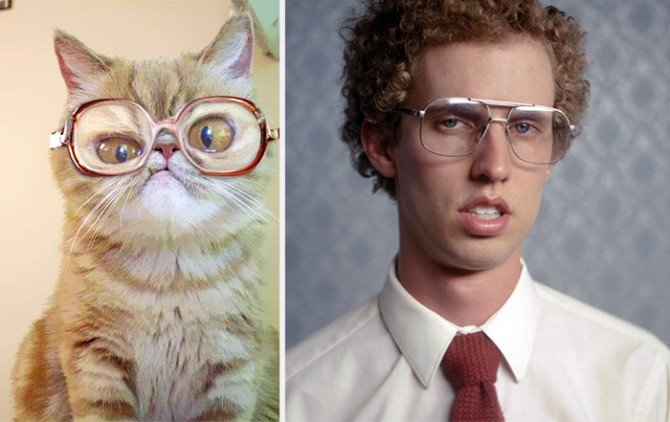 10-incredible-cats-that-look-like-famous-people-9-670x422