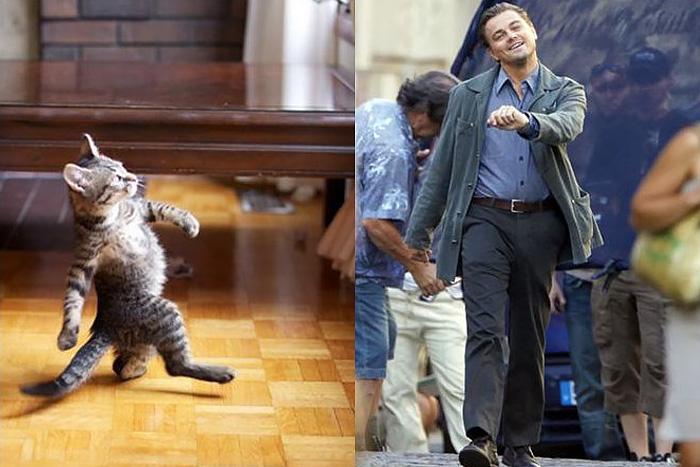 Котенок и ДиКаприо