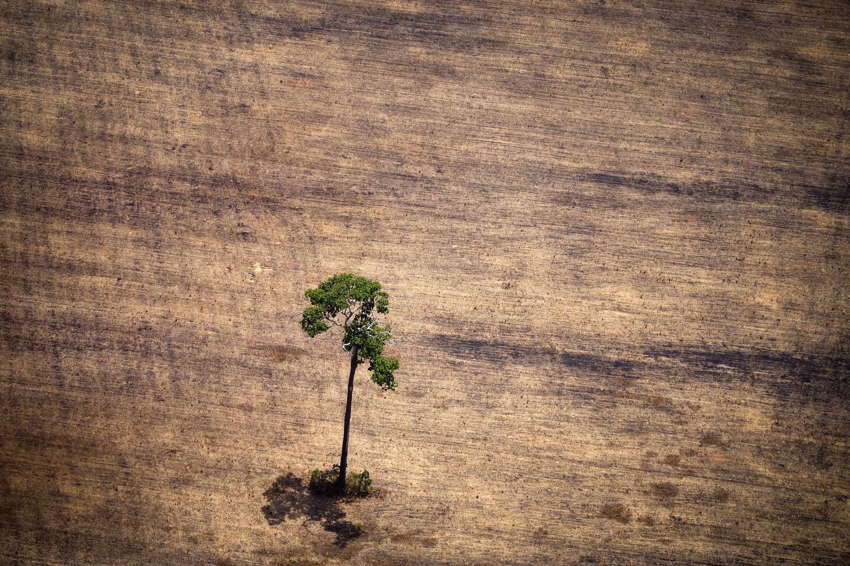 Earth-Day-Wood-2