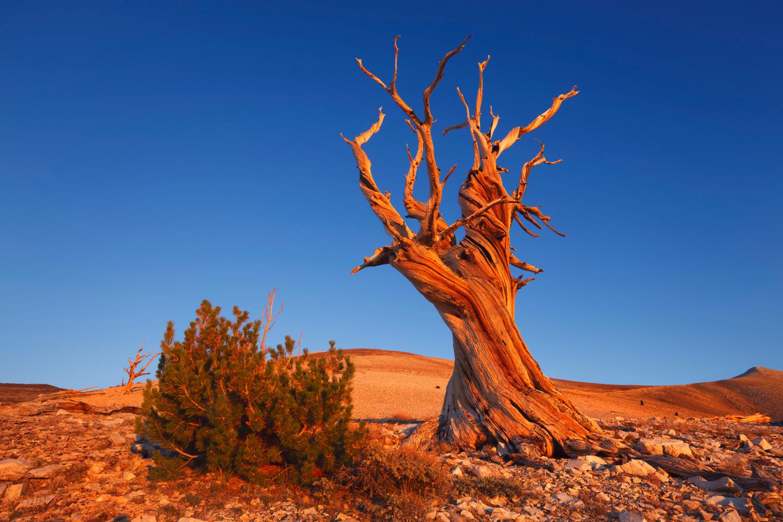 Earth-Day-Wood-4