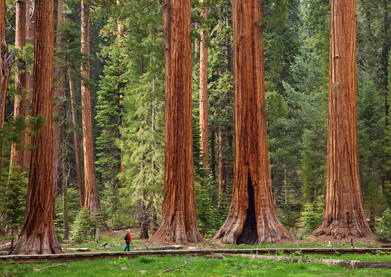 Earth-Day-Wood-5