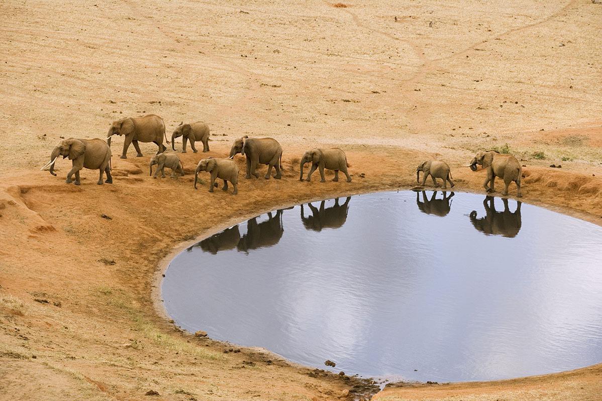 Elephants by Water Hole --- Image by © Winfried Wisniewski/Corbis