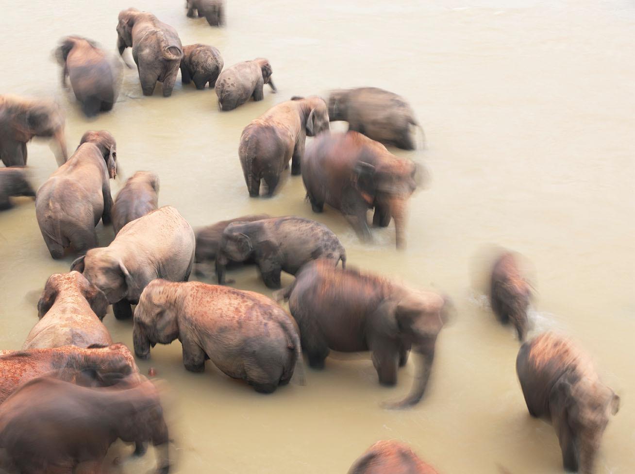 Шри Ланка слоны